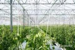SiyaRam's Greenhouse