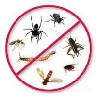 Shri Ram Samarth Pest Control Services