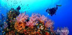 Tarkarli Scuba Diving