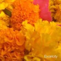Jai Matadi Flowers