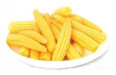 Devgad Agro Foods