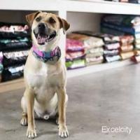 Jayraj Pet Shop