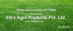 Shree Balaji Poultry farm