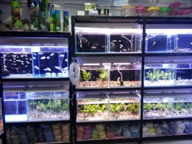Aqua Fish Emporium