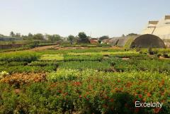 Purandar Nursery And Landscaping