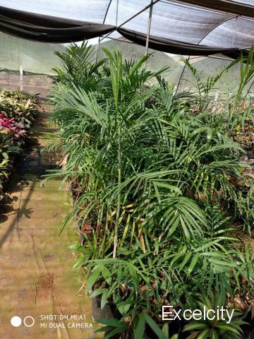 Purandar Nursery And Landscaping